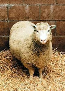 test de historia fechas de acontecimientos historicos mas relevantes del siglo 20 foto oveja dolly