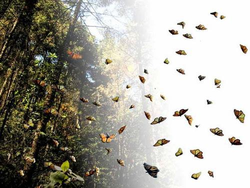 test paisajes naturales latinoamerica foto reserva mariposa monarca